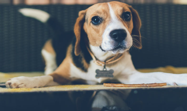 44% of Workers Would Consider Career Move For Pet-Friendly Workplace