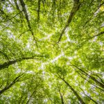 How to Make Your Workplace More Eco-Friendly
